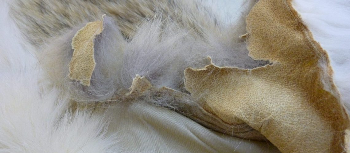 Dry Rotted Fur
